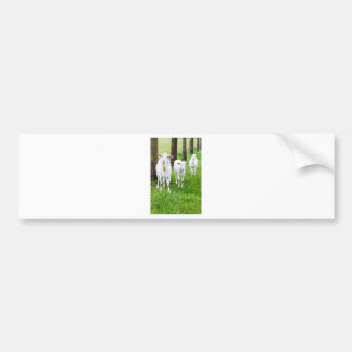 White goats on grass with tree trunks bumper sticker