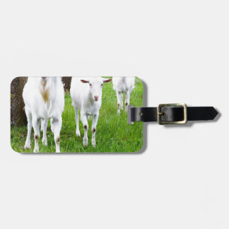 White goats on grass with tree trunks luggage tag