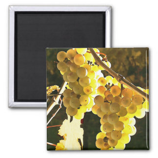 White Grapes Autumn Harvest Watercolor Refrigerator Magnet