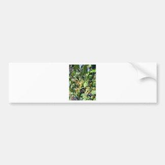 White grapes in a vineyard bumper sticker