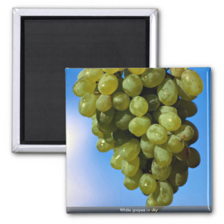 White grapes in sky magnets