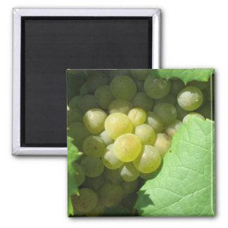 White grapes fridge magnets
