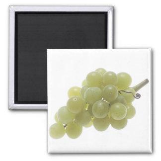 White Grapes Magnet