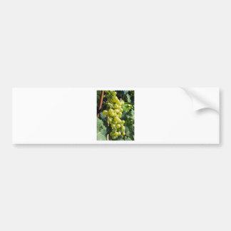 White Grapes on the Vine Bumper Sticker