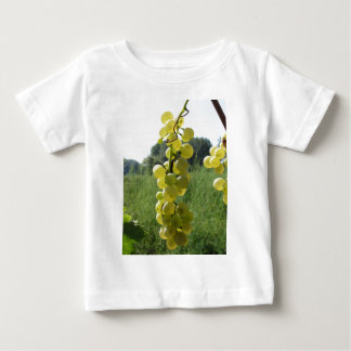 White grapes on the vine . Tuscany, Italy Baby T-Shirt