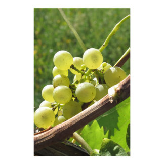 White grapes on the vine . Tuscany, Italy Personalized Stationery