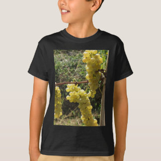White grapes on the vine . Tuscany, Italy T-Shirt