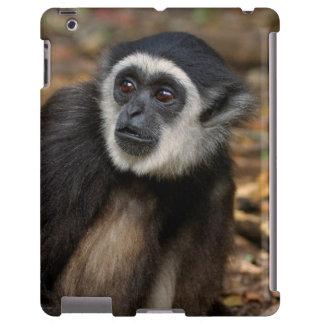 White-Handed Gibbon (Hylobates Lar), Monkeyland