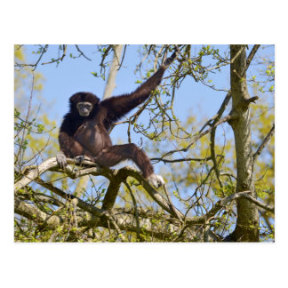White-handed gibbon in tree postcard
