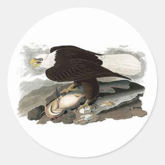 White Headed Eagle | John James Audubon Round Sticker
