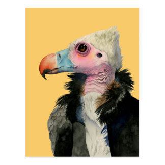 White-Headed Vulture Watercolor Painting Postcard