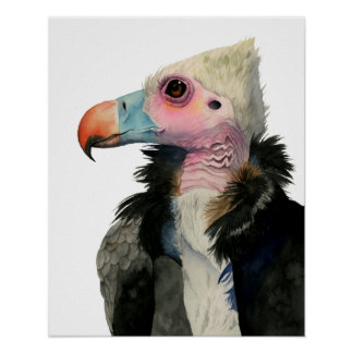 White-Headed Vulture Watercolor Painting Poster