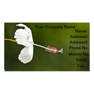 White hibiscus flower customize business card