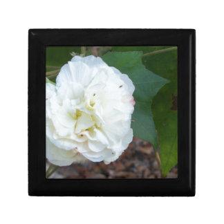 white hibiscus mutabilis flower gift box