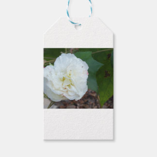 white hibiscus mutabilis flower gift tags