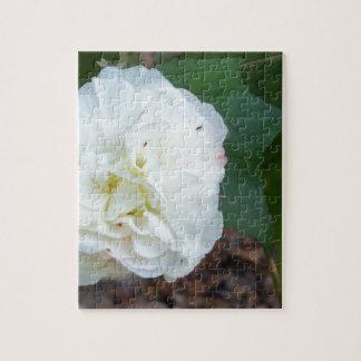 white hibiscus mutabilis flower jigsaw puzzle