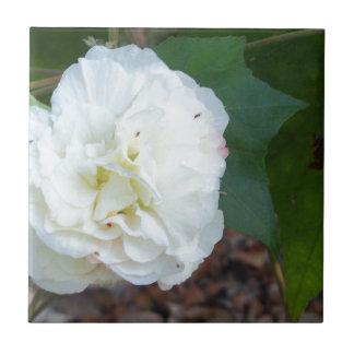 white hibiscus mutabilis flower tile