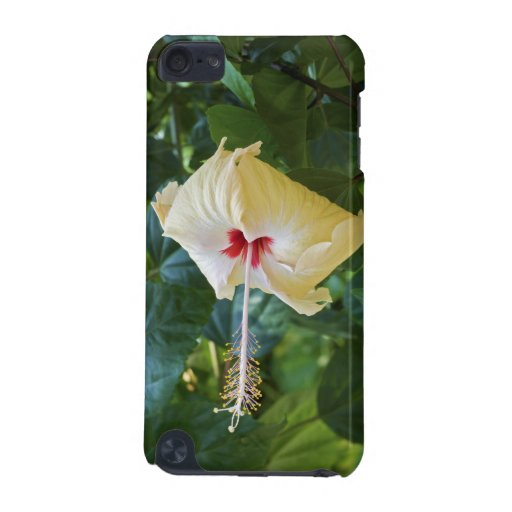 White Hibiscus Rosa Sinensis China Rose Mallow iPod Touch 5G Cover