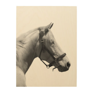 White horse black and white photography wood wall art