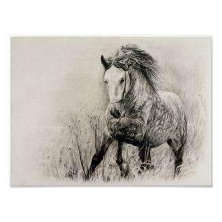 White horse in charcoal poster