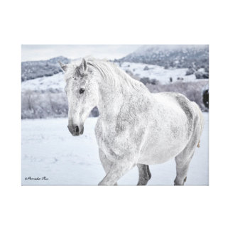 White Horse in Snow mounted on canvas Stretched Canvas Print
