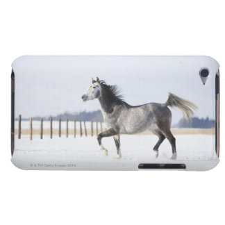 white horse in winter iPod touch case