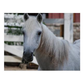 white horse post card