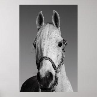 White Horse Poster,Print Poster