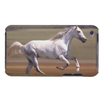 White horse running in field iPod touch cover