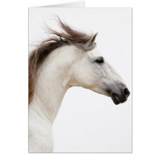 White Horse Runs Horse Greeting Card