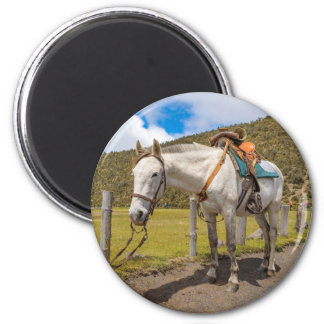 White Horse Tied Up at Cotopaxi National Park 6 Cm Round Magnet