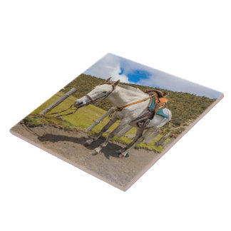 White Horse Tied Up at Cotopaxi National Park Ceramic Tile