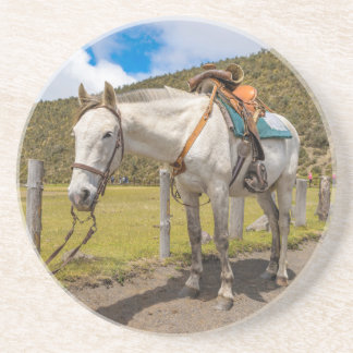 White Horse Tied Up at Cotopaxi National Park Coaster