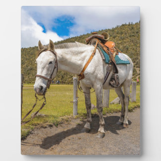 White Horse Tied Up at Cotopaxi National Park Plaque