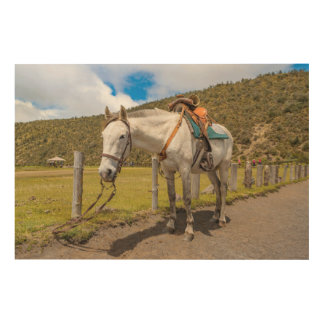 White Horse Tied Up at Cotopaxi National Park Wood Wall Art