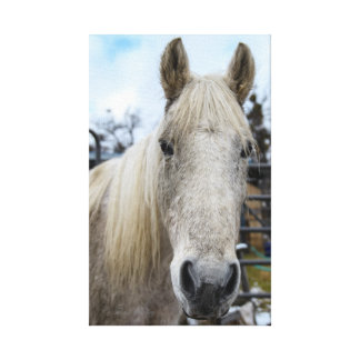 White Horse Wrapped Canvas