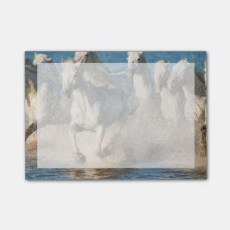 White horses of Camargue, France Post-it Notes