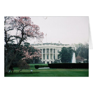 White House with Cherry Blossoms  Card