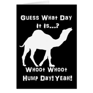 White Hump Day Camel Greeting Cards