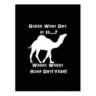 White Hump Day Camel Postcard