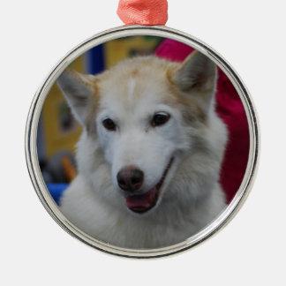 White Husky Ornaments