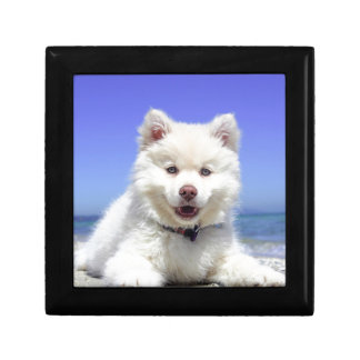 White Husky Puppy with Blue Eyes Gift Box