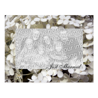 White Hydrangea Floral Just Married Photo Postcard