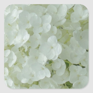 White Hydrangea Petals Square Sticker