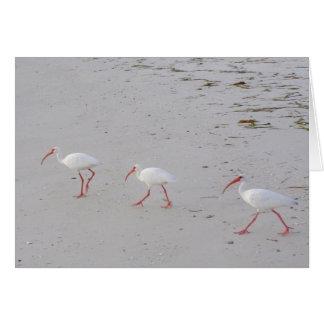 White Ibis on Beach Greeting Card