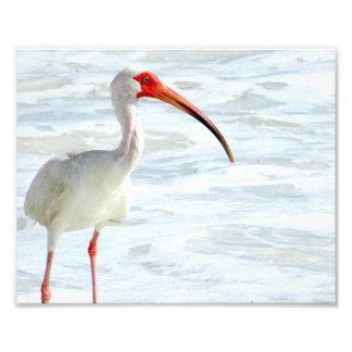 White Ibis on the Beach Art Photo