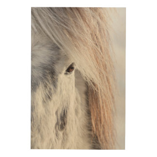 White Icelandic Horse face, Iceland Wood Wall Art