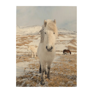 White Icelandic Horse, Iceland Wood Wall Art