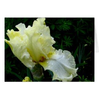 White Iris Card