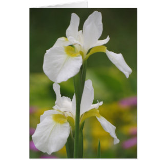 White Iris Pair Card
